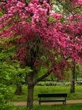 Pesante con il fiore Immagine Stock