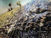 pesca imagem de stock