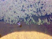 Pesca Fotos de archivo libres de regalías