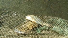 Pesca Fotografía de archivo