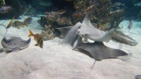 Pesca amarillo del waterworld Fotografía de archivo