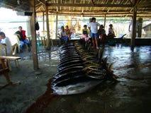 Pesca artesanal del atún de trucha salmonada en Philippines#18 Foto de archivo