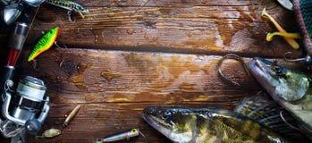 Pesca bem sucedida Os peixes e o equipamento de pesca travados do zander cortejam sobre foto de stock