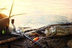 Pesca bem sucedida Peixes e equipamento de pesca travados de Pike no woode foto de stock royalty free