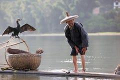 Pesca china del hombre con los pájaros de los cormoranes adentro Fotos de archivo