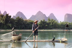 Pesca chinesa do homem com pássaros dos cormorões dentro Fotos de Stock Royalty Free