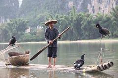 Pesca chinesa do homem com pássaros dos cormorões dentro Imagens de Stock