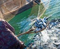 Pesca com colher Fotos de Stock
