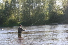 Pesca com mosca mim Byskeälv, Suécia de Norrland Fotos de Stock