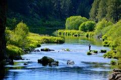 Pesca con la mosca curvata del fiume immagini stock libere da diritti
