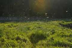 pesca con la mosca dell'efemera Fotografie Stock