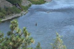 Pesca con la mosca il fiume Missouri vigoroso immagine stock libera da diritti