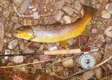 Pesca con la mosca - pesce, barretta e bobina Immagine Stock