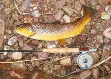 Pesca con la mosca - pesce, barretta e bobina Fotografia Stock