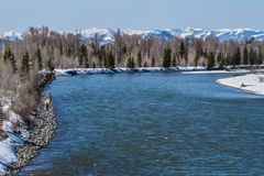 Pesca con la mosca sul fiume Snake Fotografie Stock