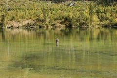 Pesca con mosca caucásica del hombre en el lago del alpin, Austria Foto de archivo