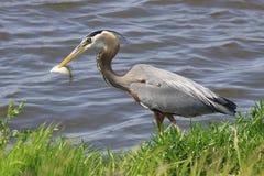 Pesca da lança foto de stock