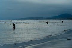 Pesca da rede de molde no Mar Negro Imagens de Stock Royalty Free
