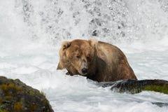 Pesca de Alaska del oso marrón Foto de archivo libre de regalías