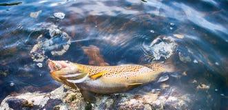 A pesca de giro seduz a truta da pesca nos lagos de Escandinávia Foto de Stock