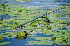 Pesca de la caña de pescar Imagen de archivo