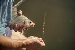 Pesca de la carpa, pesca, cogida de los pescados Foto de archivo libre de regalías