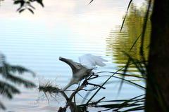 Pesca de la grúa Foto de archivo libre de regalías