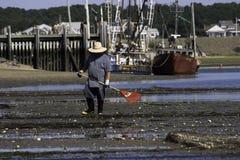 Pesca de la ostra de la persona en el puerto de Wellfleet, Wellfleet, Massachusetts Foto de archivo
