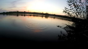 Pesca de la tarde almacen de video