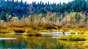 Pesca de los lugares de desove de Stave River río abajo desde la presa de Ruskin en Hayward Lake cerca de la misión, A.C., Canadá imágenes de archivo libres de regalías