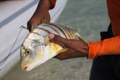 Pesca de mar em Tailândia fotos de stock royalty free