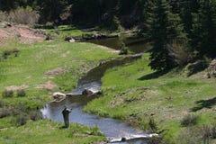 Pesca de mosca de Colorado Imagen de archivo libre de regalías