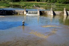 Pesca de mosca en aguas tranquilas imagen de archivo