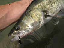 Pesca dei glaucomi sul lago Immagine Stock