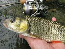 Pesca del cavedano sul lago Immagine Stock Libera da Diritti