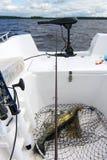 Pesca del crogiolo di glaucomi Fotografie Stock