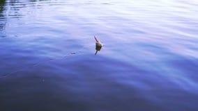 Pesca del flotador en el lago almacen de metraje de vídeo