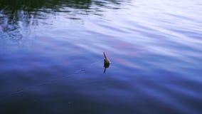 Pesca del flotador en el lago metrajes
