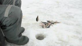Pesca del hielo. almacen de video