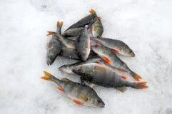 Pesca del hielo. Foto de archivo libre de regalías