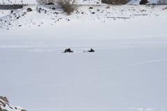 Pesca del hielo en Mesa Reservoir azul Fotografía de archivo