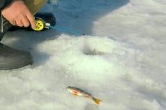 Pesca del invierno. Fotos de archivo libres de regalías