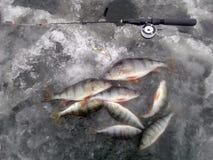 pesca del invierno en Rusia en el Volga foto de archivo