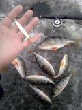 pesca del invierno en Rusia en el Volga superior imagenes de archivo