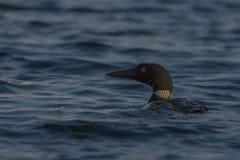 Pesca del lunatico sul lago fotografia stock libera da diritti