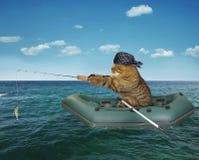 Pesca del ` s del gatto su una barca immagini stock