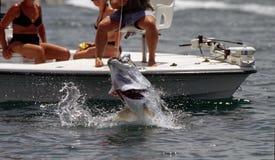 Pesca del tarpone immagine stock