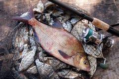 Pesca del trofeo Pescados y ca?a de pescar comunes de agua dulce grandes de la brema con el carrete en red de aterrizaje fotos de archivo libres de regalías