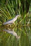 Pesca dell'uccello nel lago Fotografie Stock