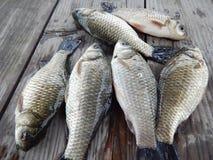 Pesca della carpa Immagini Stock